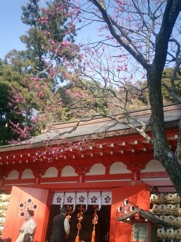 02)鎌倉市二階堂「荏柄天神社」11:30am頃。鎌倉で最初に咲くと言われる梅。