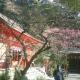 04)鎌倉市二階堂「荏柄天神社」11:30am頃。鎌倉で最初に咲くと言われる梅。