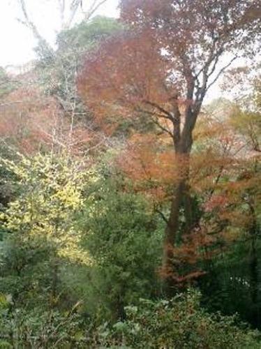 05)北鎌倉「浄智寺」紅葉の季節