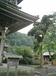 03)紫陽花。「光明寺山門」と「蓮乗院」門との間。6/22.JPG