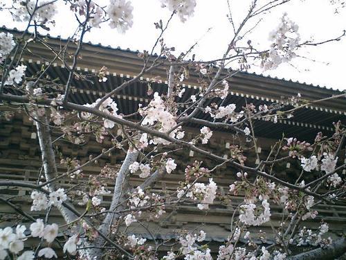 04)鎌倉市材木座「光明寺」.JPG